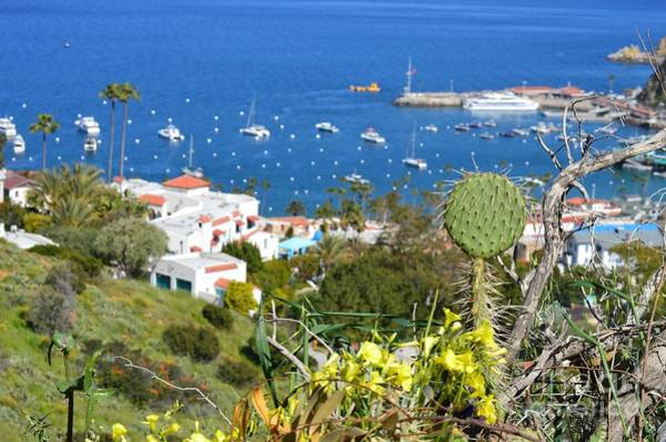 Photograph - Catalina From A View by Sheila Wenzel