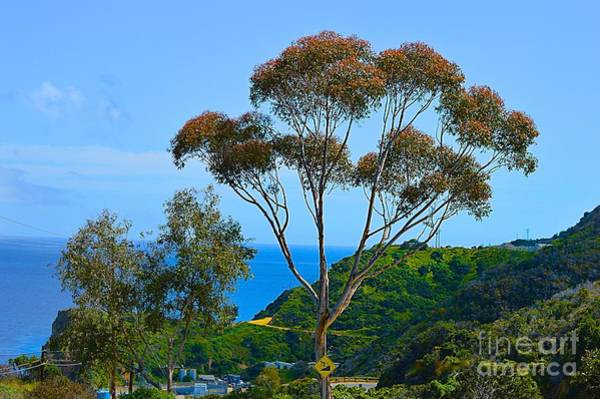 Photograph - Catalina Memories  by Sheila Wenzel