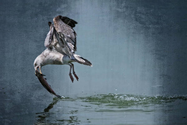 Bernadette Photograph - Catch by Bernadette Van der Vliet