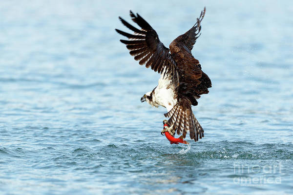 Photograph - Catch Of The Day by Beve Brown-Clark Photography