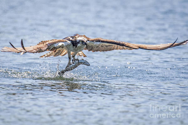 Photograph - Catch Of The Day by Craig Leaper