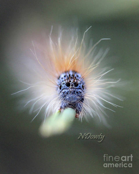 Photograph - Caterpillar Face by Natalie Dowty