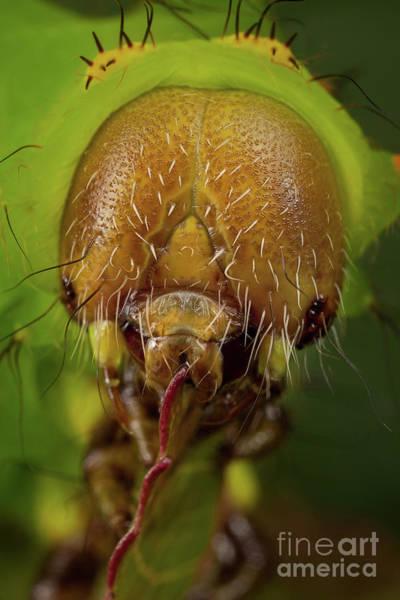 Photograph - Caterpillar Head by Marco Fischer
