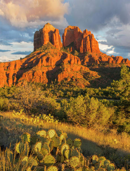 Wall Art - Photograph - Cathedral Rock, Coconino National by Tim Fitzharris