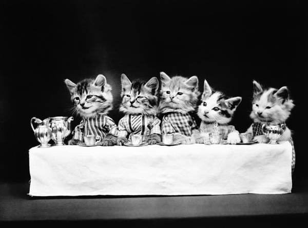 Wall Art - Photograph - Cats Having Tea - A Hungry Bunch - Harry Whittier Frees by War Is Hell Store