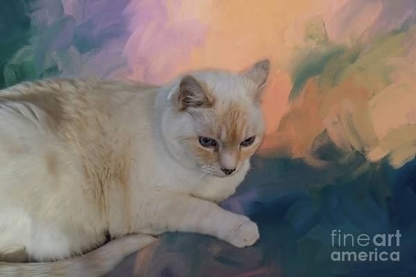 Mixed Media - Cat's Meditation by Eva Lechner