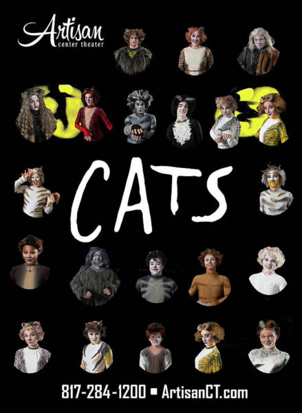 Photograph - Cats Poster 2 by Alan D Smith