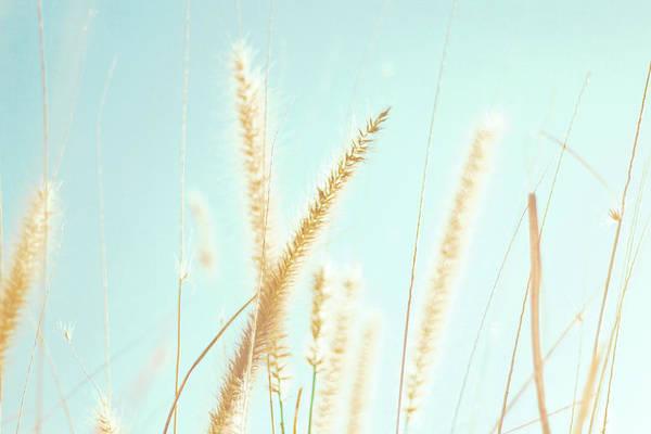 Cattails Wall Art - Photograph - Cattail Grass In Sunshine by Joyhey