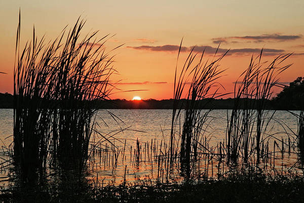 Cattails Wall Art - Photograph - Cattails At Sunset by Keithszafranski