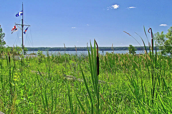 Wall Art - Photograph - Cattails Near The River At St. Laurent Maritime Park, Ile D'orleans, Quebec  by Ruth Hager