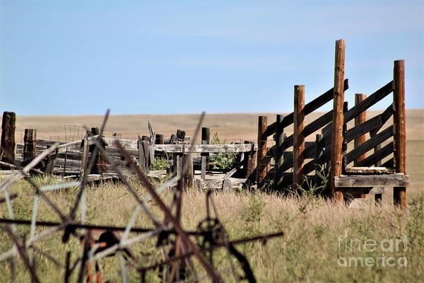 Photograph - Cattle Chute by Tammie J Jordan