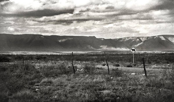 Photograph - Cattle Zone by Carl Young