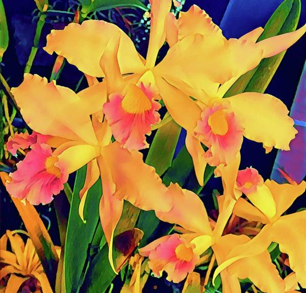 Photograph - Cattleya Orchids In Peach Aloha  by Joalene Young