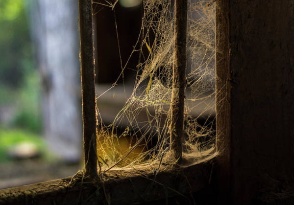 Photograph - Caught In The Barn by Steven Clark