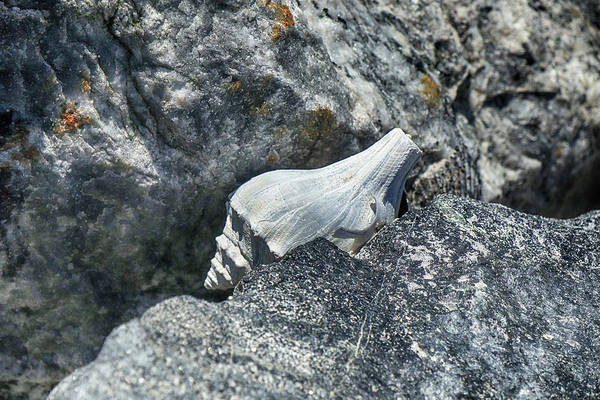 Photograph - Caught In The Rocks by Cate Franklyn