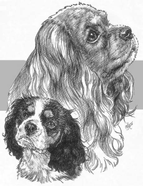 Drawing - Cavalier King Charles Spaniel And Pup by Barbara Keith