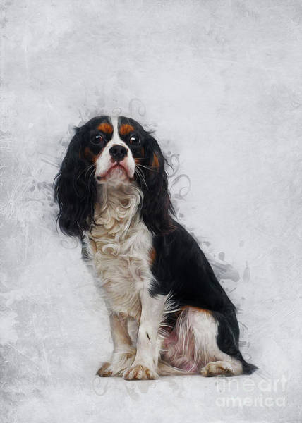 Digital Art - Cavalier King Charles Spaniel by Ian Mitchell