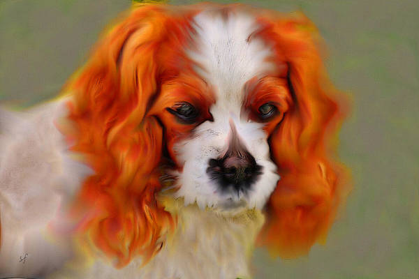 Digital Art - Cavalier King Charles Spaniel, Red Dog Portrait by Shelli Fitzpatrick