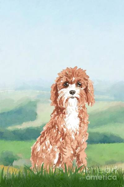 Pedigree Painting - Cavapoo by John Edwards