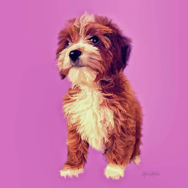 Michael Miller Wall Art - Painting - Cavoodle Puppy by Michael Miller