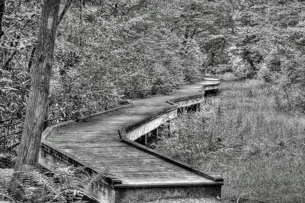 Photograph - Cedar Swamp by Dawn J Benko
