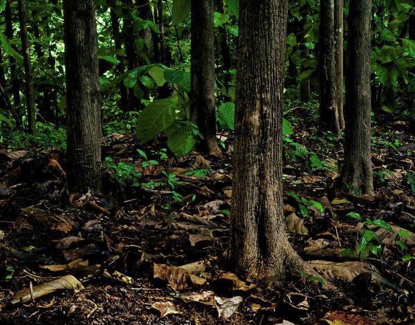 Photograph - Cedar Trees by Trinidad Dreamscape