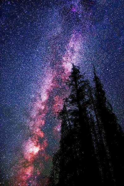 Photograph - Celestial Starlight In The Forest Near  Lake Irene Colorado By Olena Art - Brand  by OLena Art - Lena Owens