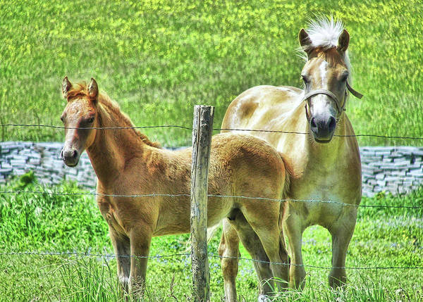 Photograph - Celtic Ponies by JAMART Photography