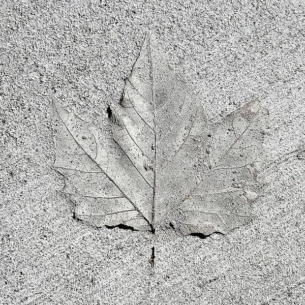 Photograph - Cement Leaf by Tom Romeo