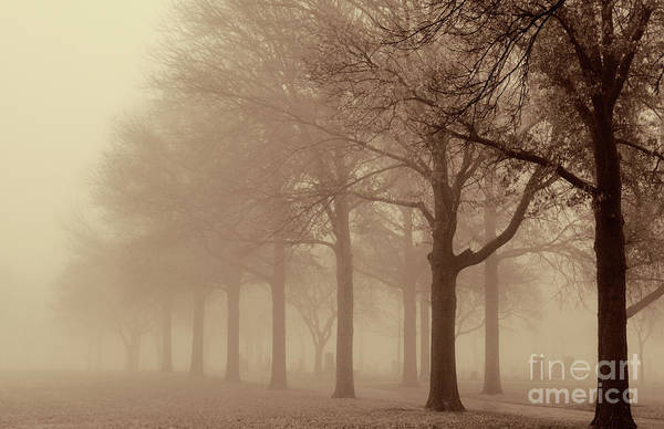 Photograph - Cemetary Beyond The Trees by Pam  Holdsworth