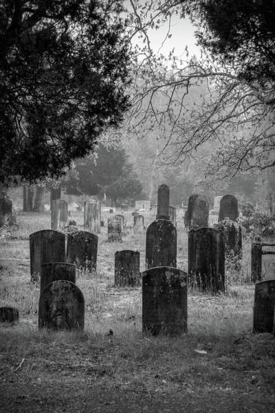 Photograph - Cemetery In The Pines Bw by Kristia Adams