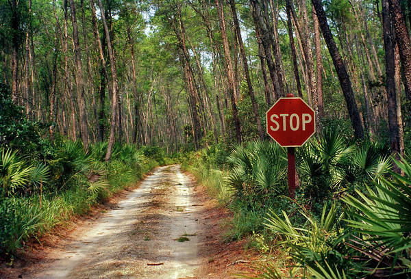 Southern Usa Photograph - Central Florida, Stop Sign, Ocala by Pat Canova