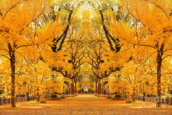 Wall Art - Photograph - Central Park Autumn In Midtown by Songquan Deng