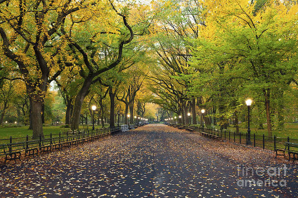 Beauty In Nature Wall Art - Photograph - Central Park. Image Of  The Mall Area by Rudy Balasko
