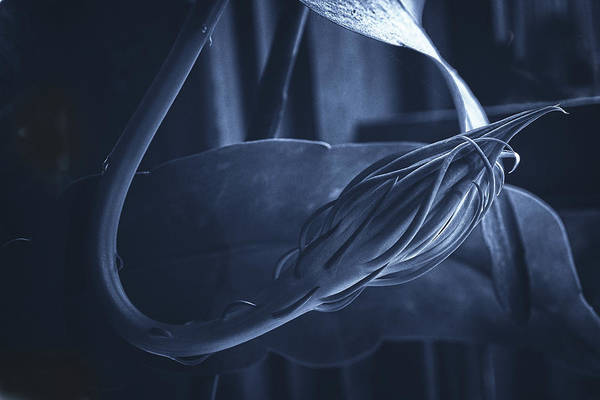 Wall Art - Photograph - Cereus Bud In Tones Of Blue by Susan Capuano