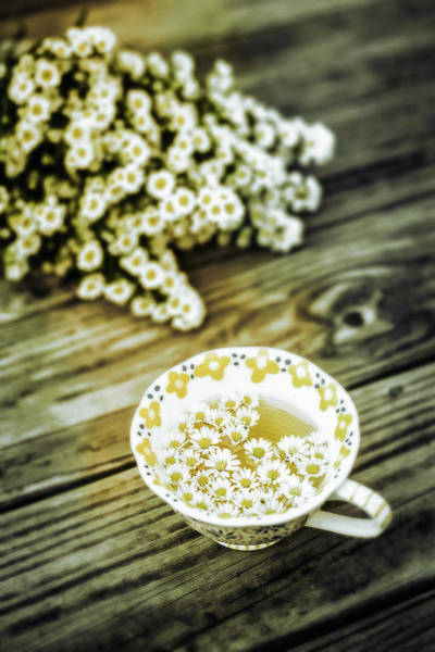 Photograph - Chamomile Tea by Susan Maxwell Schmidt