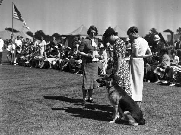 White Dog Photograph - Champion Klodo by Bert Morgan