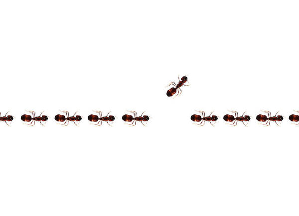 Ant Photograph - Change Of Direction by Richard Newstead