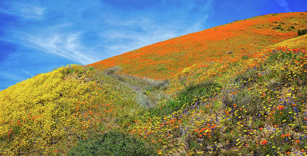 Photograph - Changing Colors On The Hill - Superbloom 2019 by Lynn Bauer