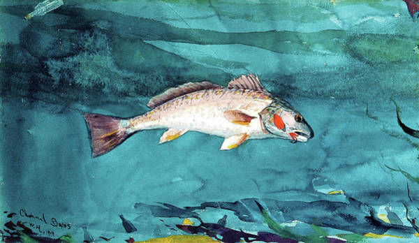 Wall Art - Painting - Channel Bass - Digital Remastered Edition by Winslow Homer