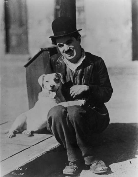 Dog Photograph - Chaplin And Mutt by Fpg