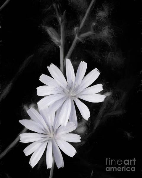 Nectar Mixed Media - Charcoal Chicory by Mellissa Ray
