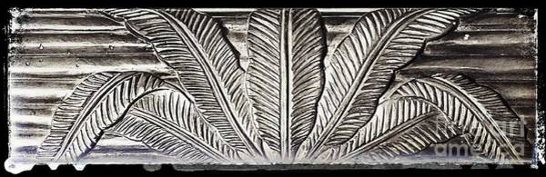 Wall Art - Photograph - Charcoal Palm Leaves by Marie-Elaina Reichle HCA CPhT
