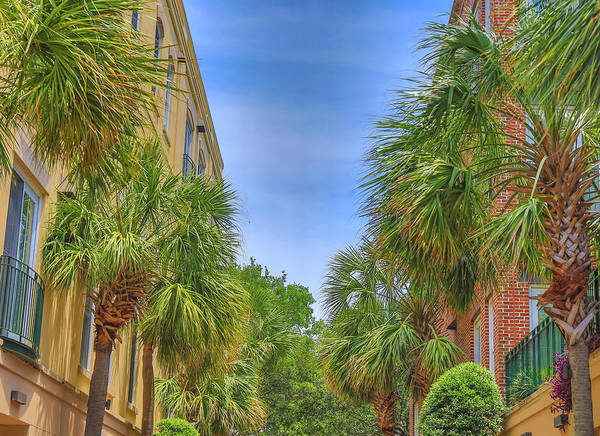 Photograph - Charleston Palmetto Trees by Dan Sproul