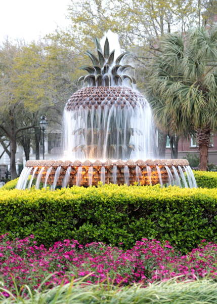 Photograph - Charleston Pineapple Fountain by Carol Groenen