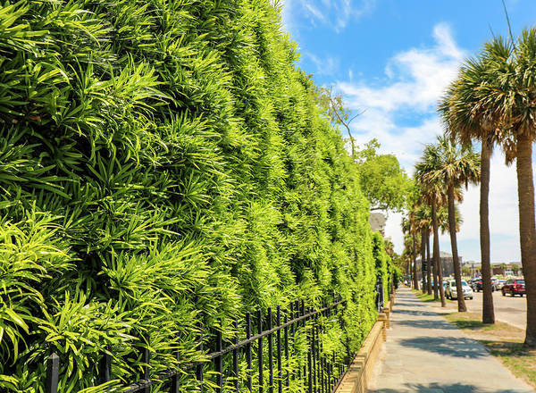 Battery D Wall Art - Photograph - Charleston Sidewalk by Dan Sproul