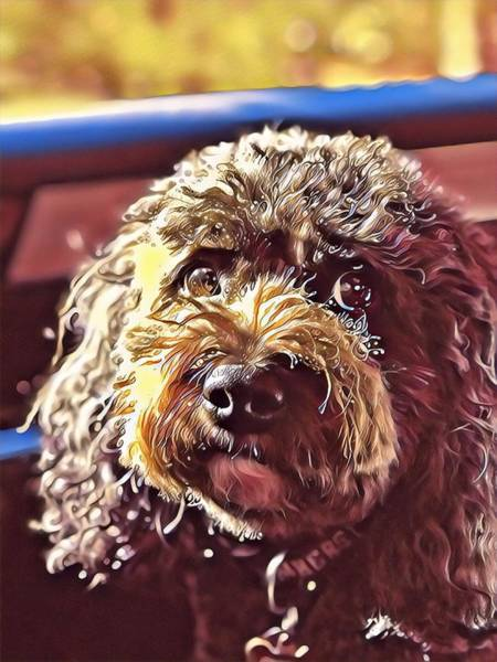 Digital Art - Charlie Sparkles by Cindy Greenstein