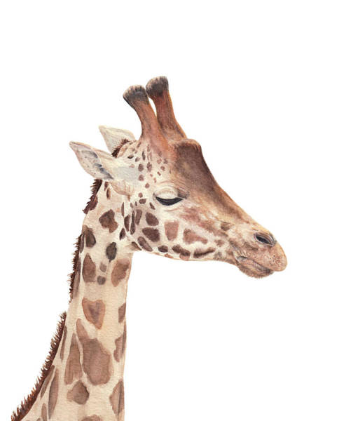 Painting - Charlie The Giraffe by Elizabeth Lock