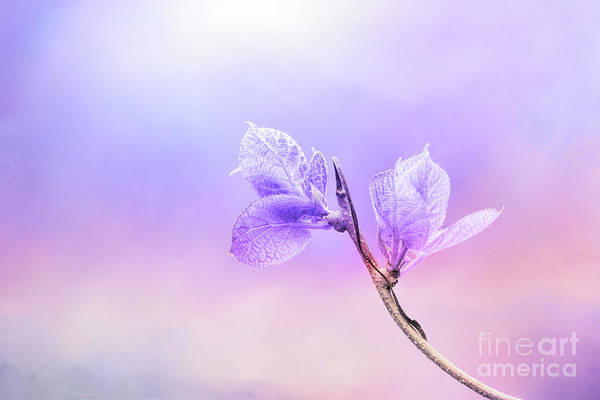 Photograph - Charming Baby Leaves In Purple by Anita Pollak