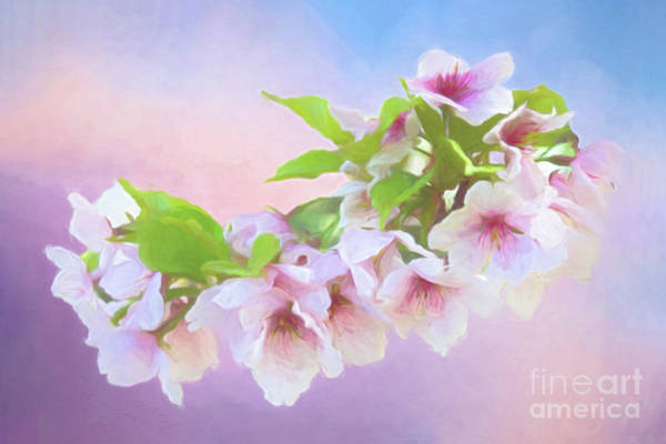 Photograph - Charming Cherry Blossoms by Anita Pollak